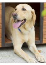 Bons Plans Botanic : Protégez votre chien de la chaleur pour 17,90€