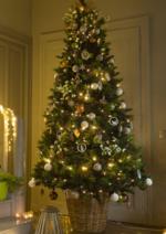 Catalogues et collections Botanic : Sapins de Noël
