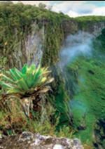 Promos et remises  : La propolis verte du Brésil