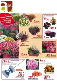 Catalogues et collections Les amis verts CHAMBOURCY : Les chrysanthèmes et les fleurs de Toussaint sont arrivés !